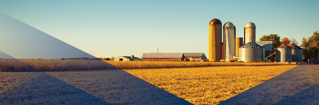 Image Description.  Farm with tall silos surrounded by harvested fields.